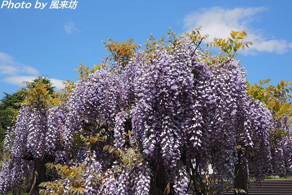 北の丸公園で花散歩_d0358854_20424798.jpg