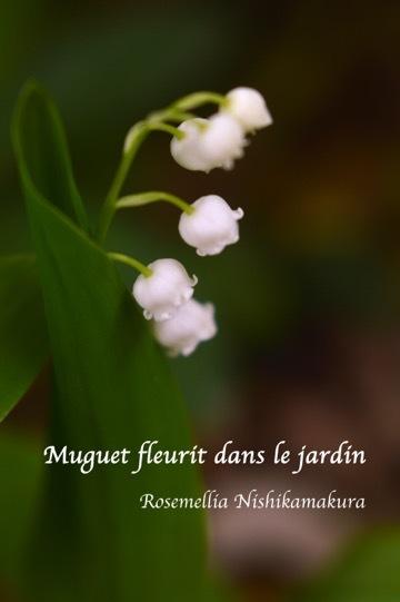 お庭のすずらん_d0078355_13285088.jpg