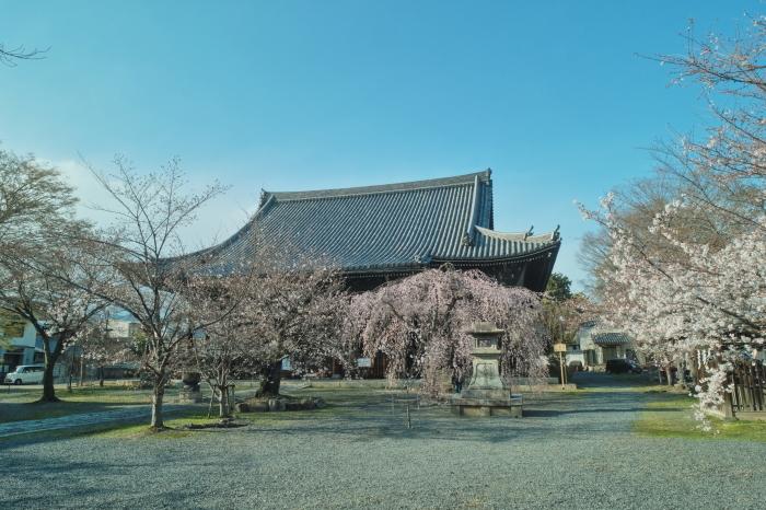 京都 桜 2021_f0021869_23521883.jpg