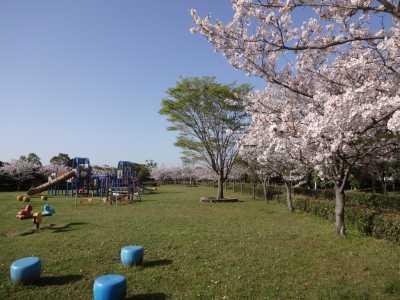 富浜緑地・中川口緑地 満開を迎えたさくらの紹介_d0338682_14085353.jpg