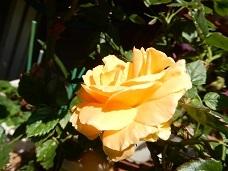 2021Apr.庭の花 3_a0350883_01272069.jpg