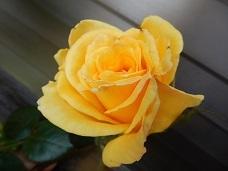 2021Apr.庭の花 3_a0350883_01293640.jpg
