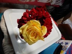 2021Apr.庭の花 3_a0350883_01364763.jpg