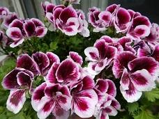2021Apr.庭の花 3_a0350883_01372663.jpg