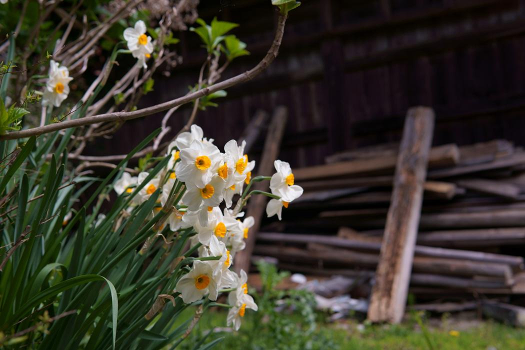 21.04.03:富士町麻那古辺りを中心に山里の春を散策1_c0007190_18545246.jpg