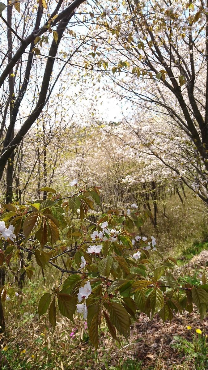 春の萌黄色_e0124493_14434469.jpg