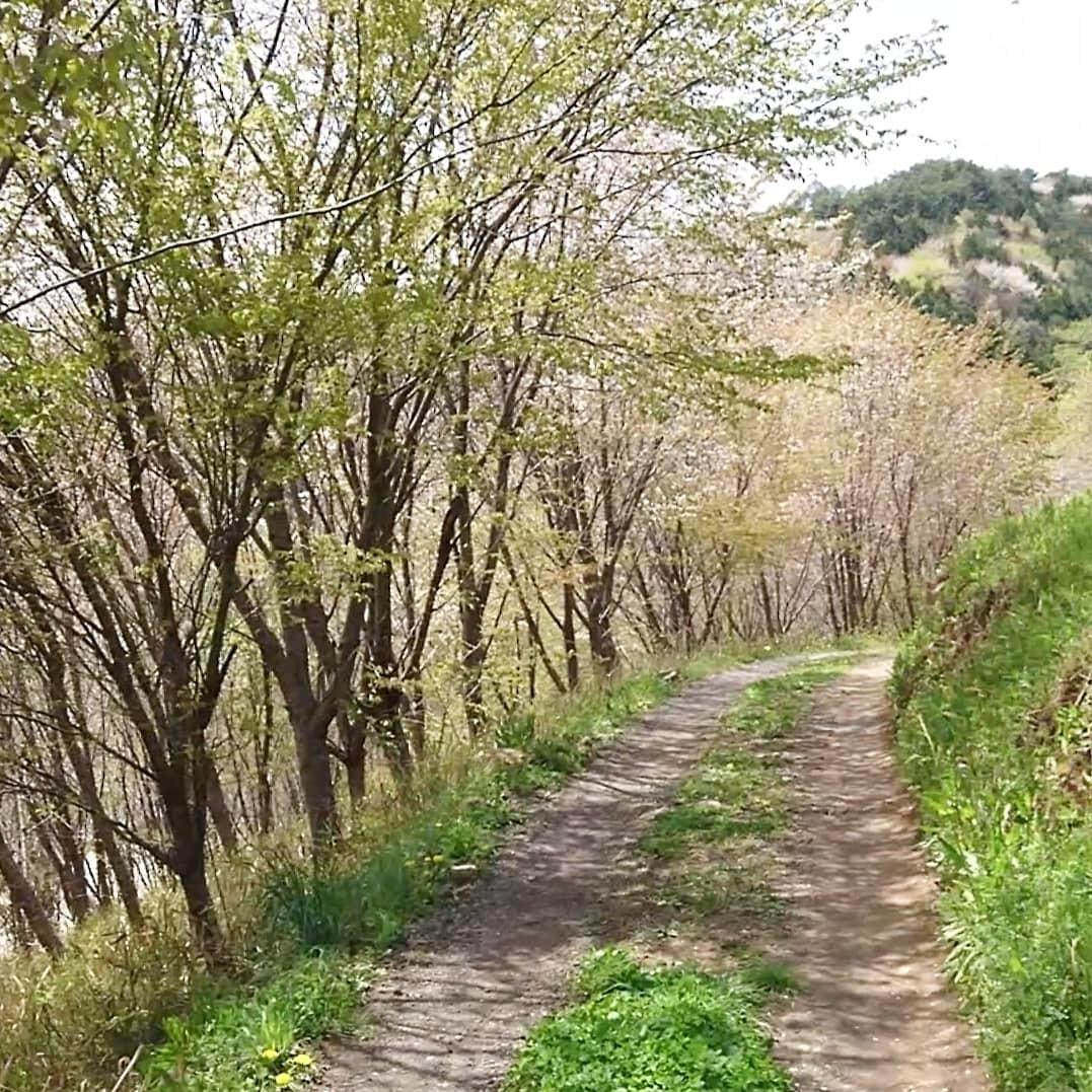 春の萌黄色_e0124493_14462618.jpg