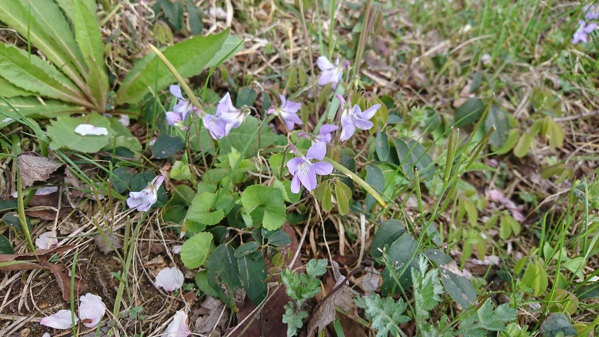 春の萌黄色_e0124493_14475759.jpg