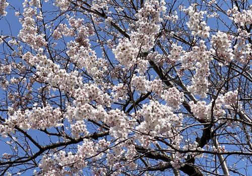 アトリエの庭の春_e0054299_13550628.jpg