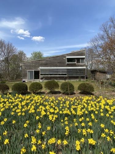 アトリエの庭の春_e0054299_13551395.jpg