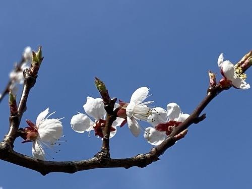 アトリエの庭の春_e0054299_13551550.jpg