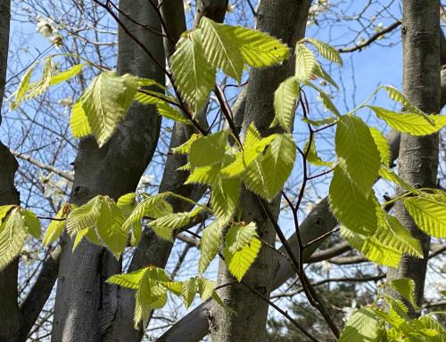 アトリエの庭の春_e0054299_13551891.jpg