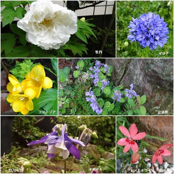 娘達と買い物・畑・庭の花_c0051105_16432137.jpg
