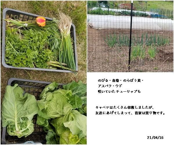娘達と買い物・畑・庭の花_c0051105_22152530.jpg