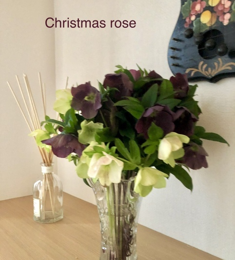 Christmas rose_e0155609_11442036.jpeg