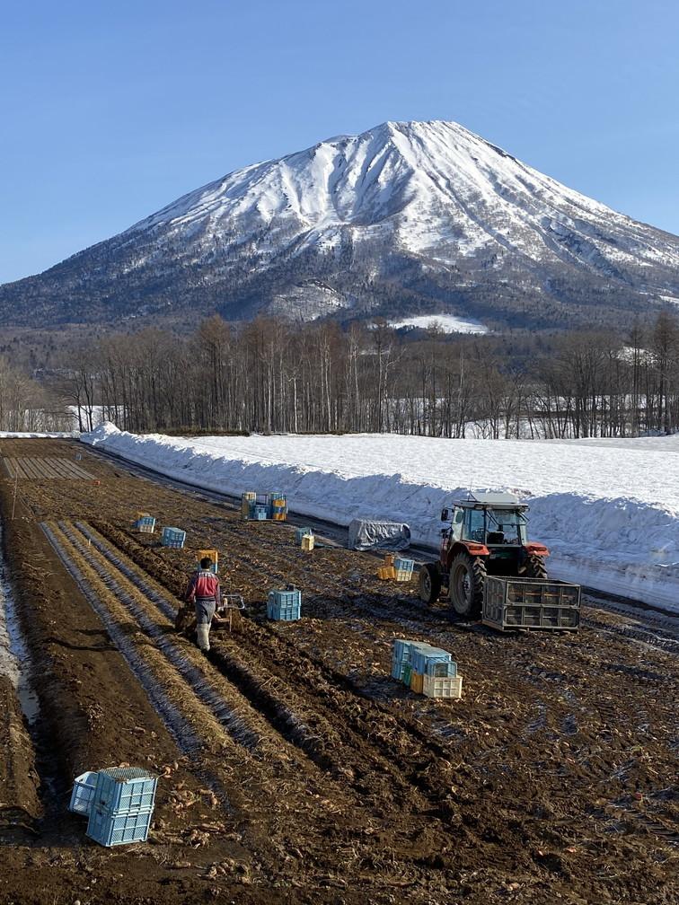 """2021年3月 『山スキーの大雪旭岳、ニセコ、羊蹄山』  March 2021 \""""Ski in Mt Taisetsu, Mt Niseko & Mt Yotei\""""_c0219616_18081096.jpg"""