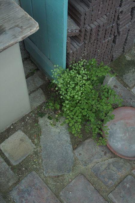 花に嵐_a0384327_22101331.jpg