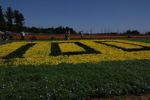 富田さとにわ農園(千葉市富田都市農業センター)_c0104227_14113285.jpg
