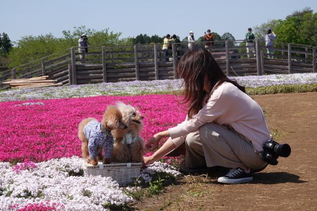 富田さとにわ農園(千葉市富田都市農業センター)_c0104227_14131740.jpg
