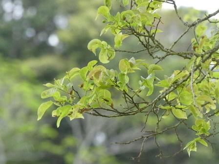 この季節、枝先はいろいろ_a0123836_17050889.jpg