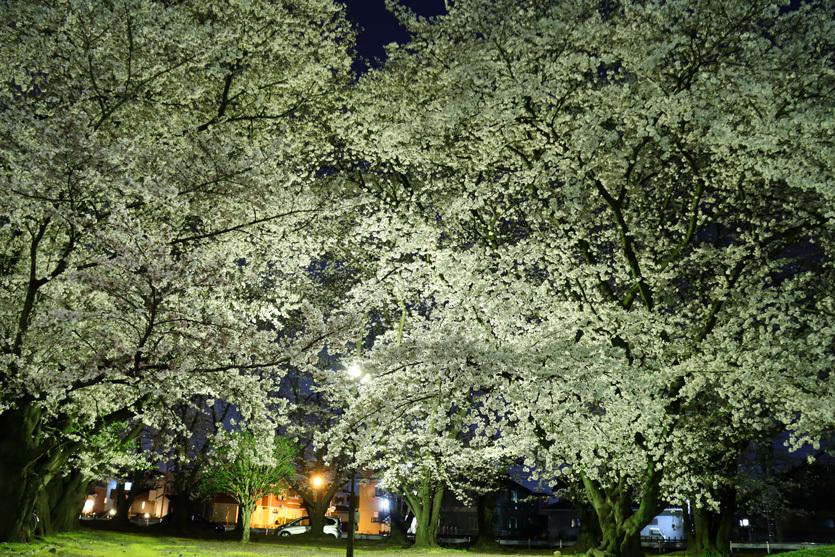 ワークムーンと夜桜_e0291438_08292409.jpg