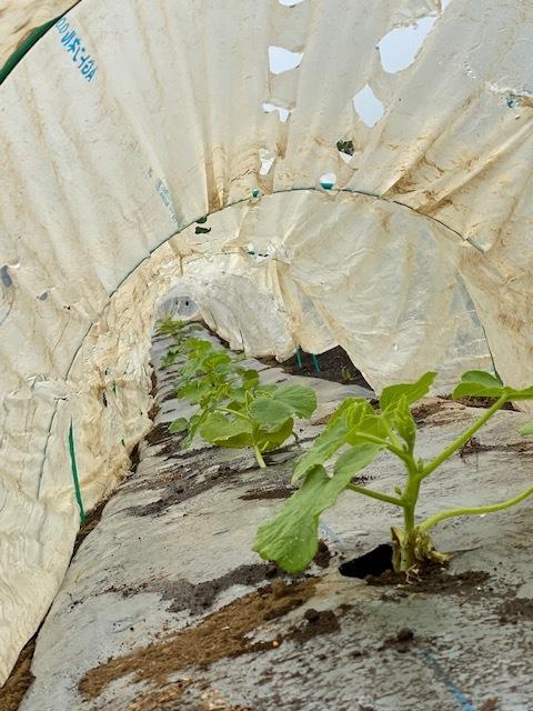 雨の為 茄子の定植は明日に延期しました_c0222448_11444207.jpg