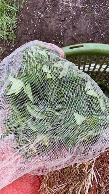 雨の為 茄子の定植は明日に延期しました_c0222448_11474953.jpg