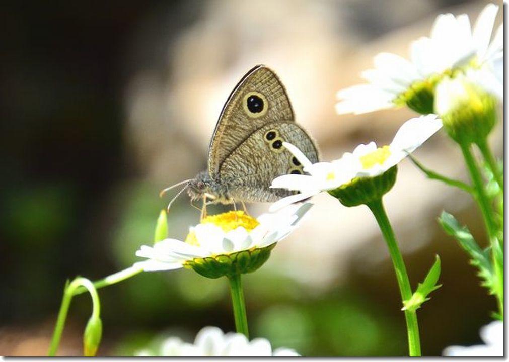 春が来た庭_d0089358_11434811.jpg