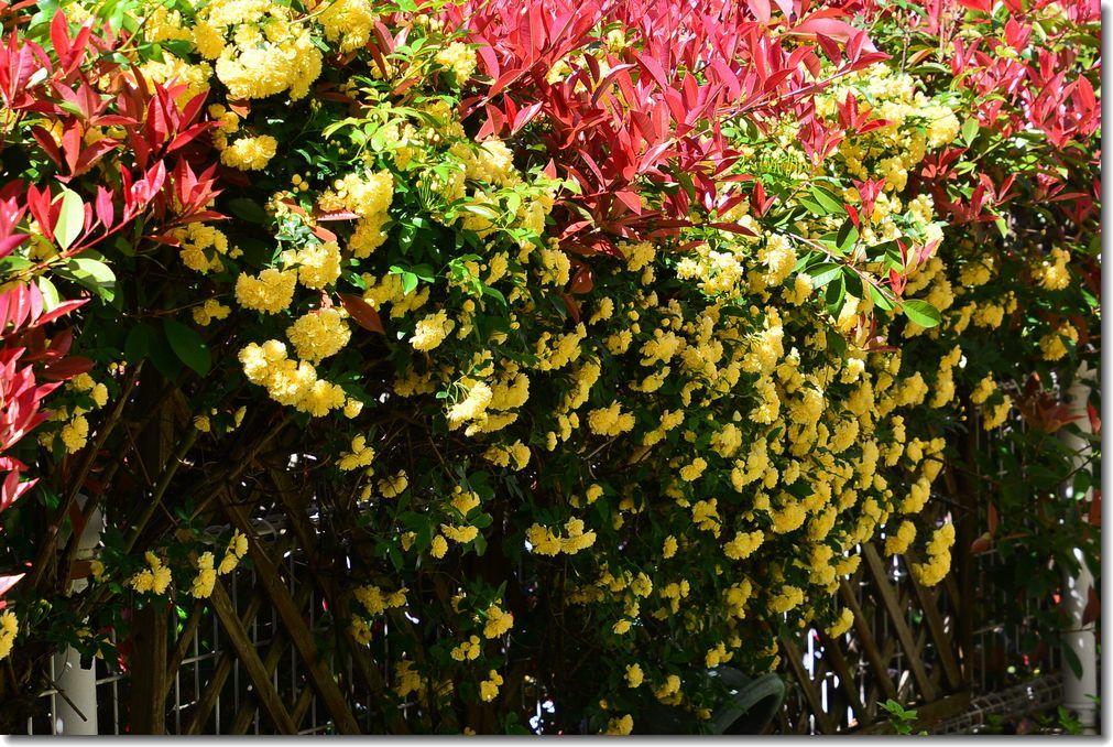 春が来た庭_d0089358_11440814.jpg