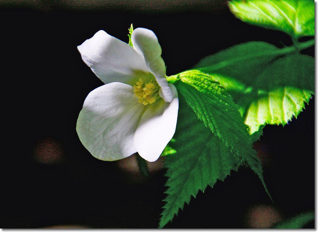 春が来た庭_d0089358_11442784.jpg