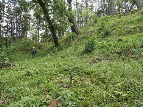 ヤマザクラ苗木5本植樹、累計650本超4・15六国見山手入れ(下)_c0014967_05385072.jpg