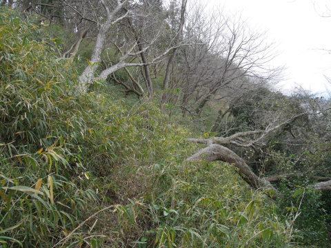 懸案の斜面地の台風被害木片付け終了!4・17六国見山手入れ_c0014967_16414063.jpg