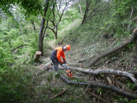懸案の斜面地の台風被害木片付け終了!4・17六国見山手入れ_c0014967_16421108.jpg