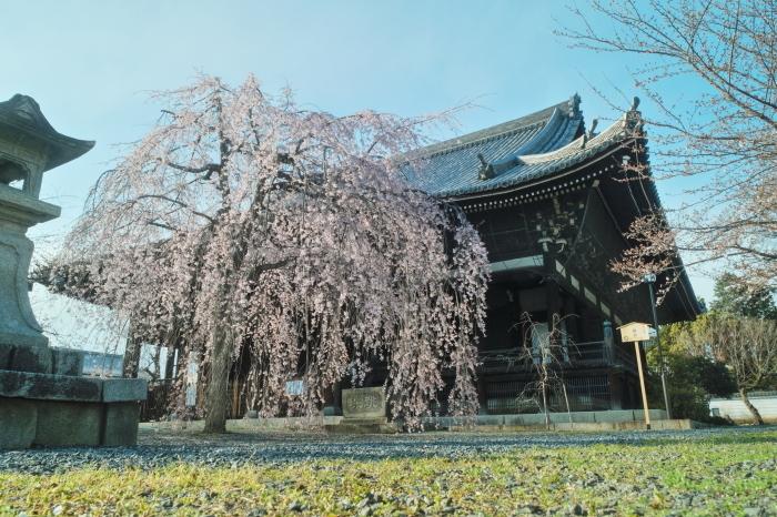 京都 桜 2021_f0021869_00080240.jpg