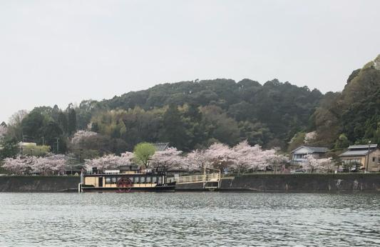 桜〜♪_e0155609_10293183.jpg