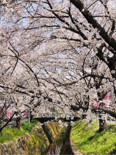 桜〜♪_e0155609_10295182.jpg