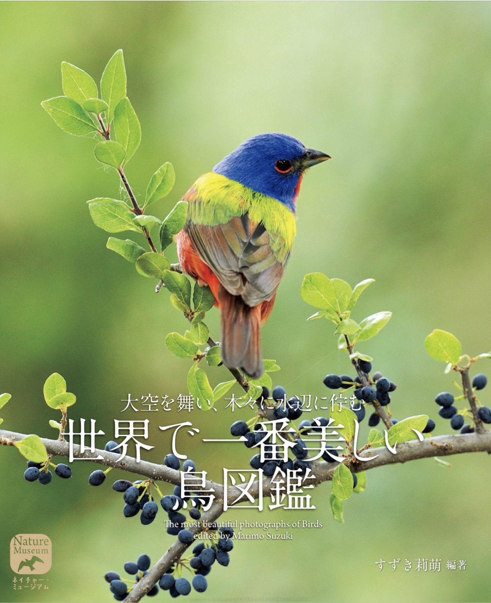 昼からずっと雨でも「世界で一番美しい鳥図鑑」で癒やされました_c0025115_00072118.jpg