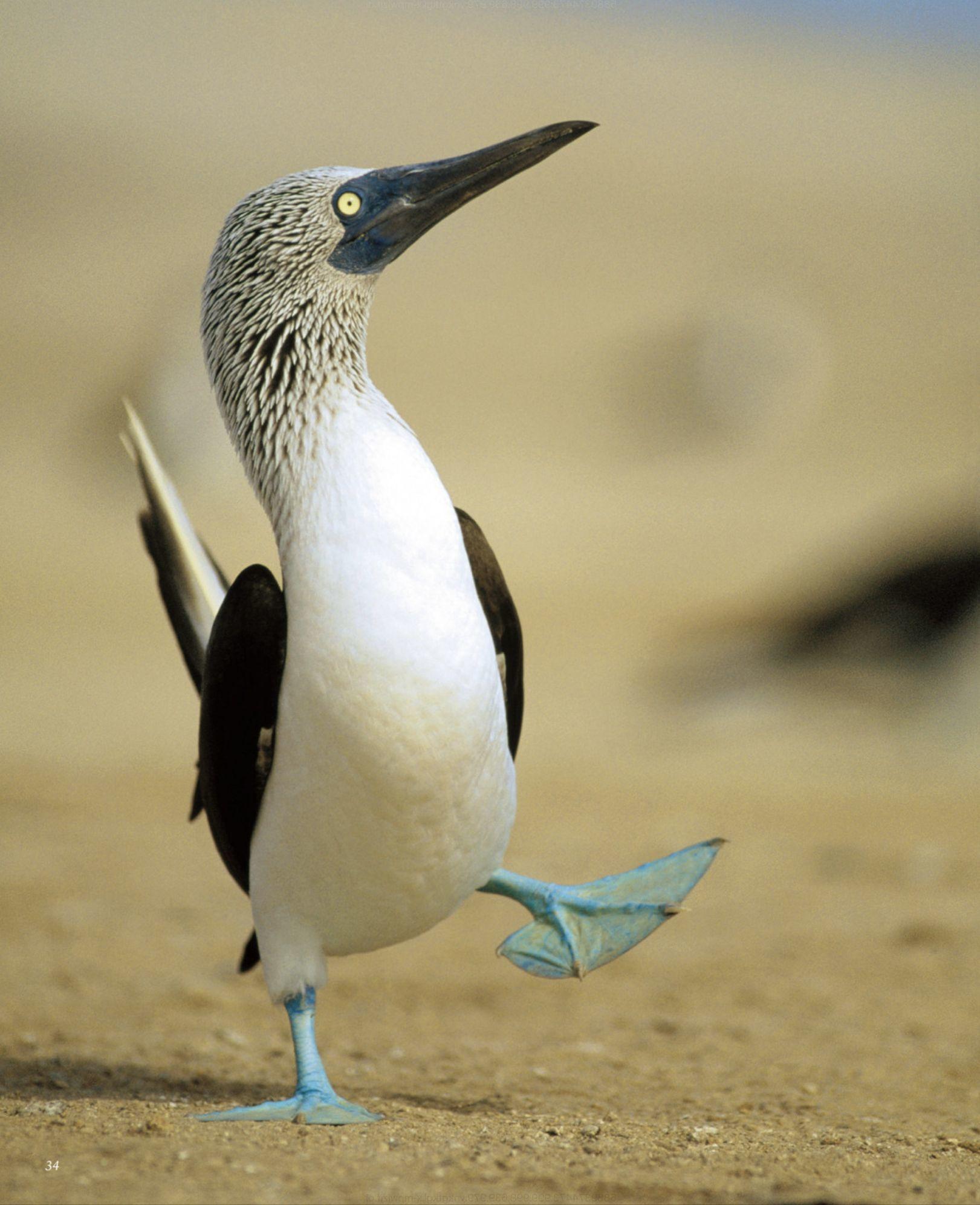 昼からずっと雨でも「世界で一番美しい鳥図鑑」で癒やされました_c0025115_00074487.jpg