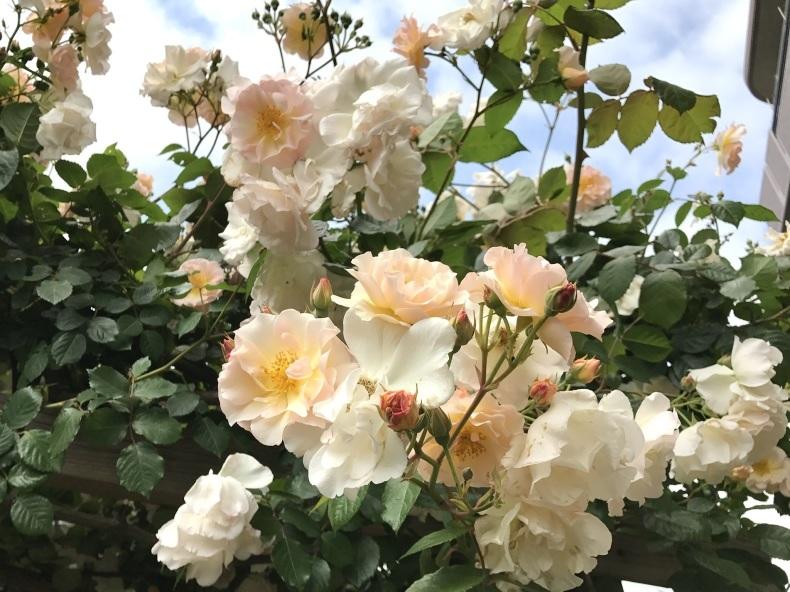 薔薇の花のお茶会*今年は5月15日(土)に決定!_d0085018_10220349.jpeg