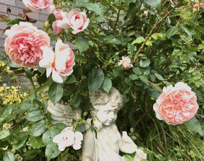 薔薇の花のお茶会*今年は5月15日(土)に決定!_d0085018_10271980.jpeg