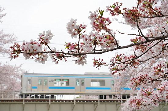 4月3日 大和路の桜を眺めて_f0037227_21422334.jpg