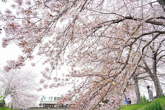 4月3日 大和路の桜を眺めて_f0037227_21423417.jpg