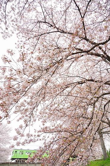 4月3日 大和路の桜を眺めて_f0037227_21424368.jpg