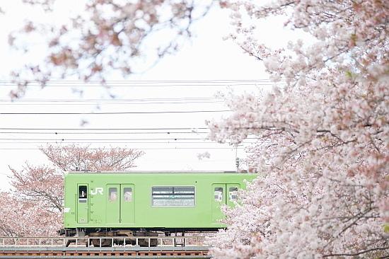4月3日 大和路の桜を眺めて_f0037227_21462667.jpg