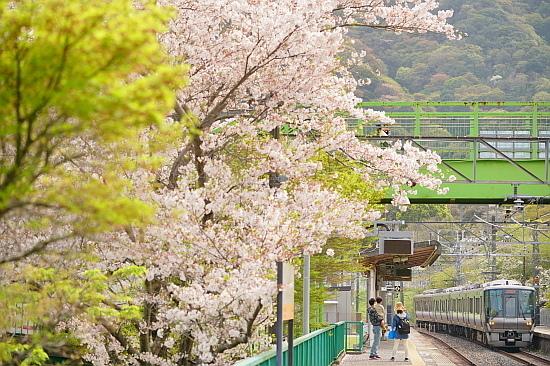 4月3日 大和路の桜を眺めて_f0037227_21465455.jpg