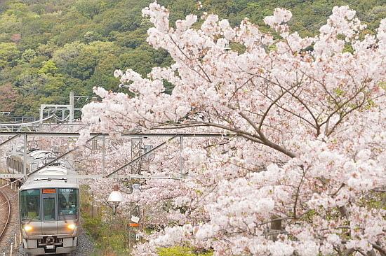 4月3日 大和路の桜を眺めて_f0037227_21471114.jpg