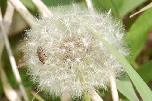 この花と~まれ_a0123836_17160115.jpg