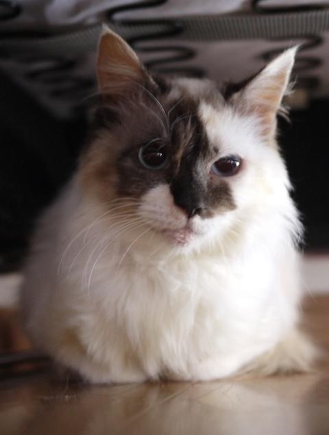 猫のお留守番 ステラちゃん編。_a0143140_22145633.jpg
