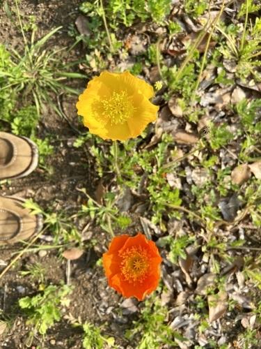 花束の道をゆく_e0071652_11061041.jpeg