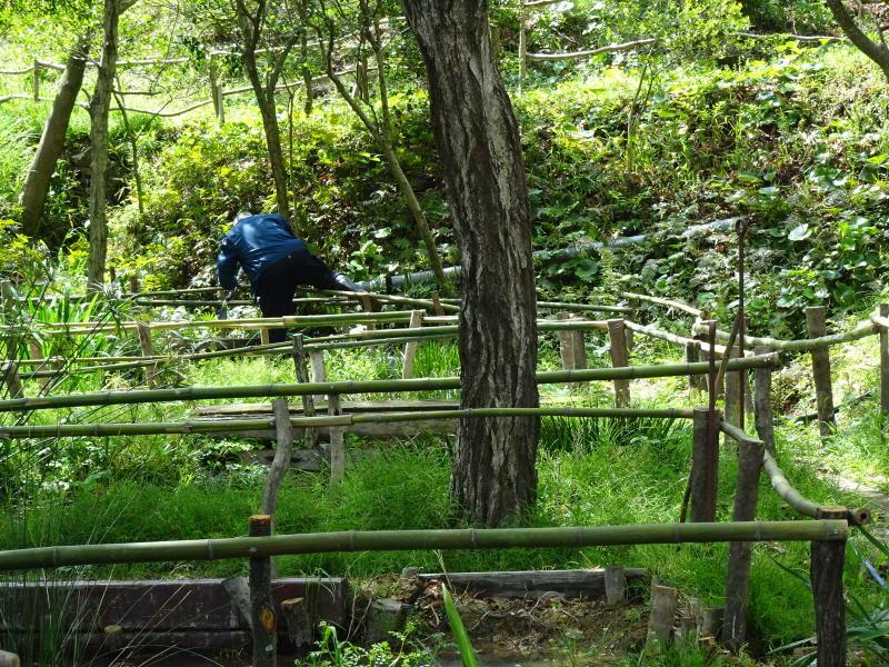 伐採木玉切りと薪置き場整理・・・自由活動日_c0108460_14455278.jpg